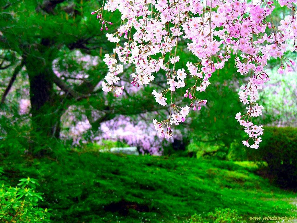 fotos de la primavera hermosas imagenes im genes