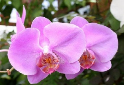 OrchidWeb.com