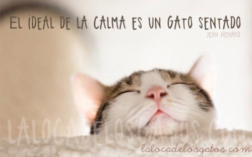 cita-gato-calma-500x312