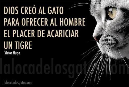 dios-creo-gato-500x337