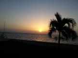 Las palmeras oscurecen